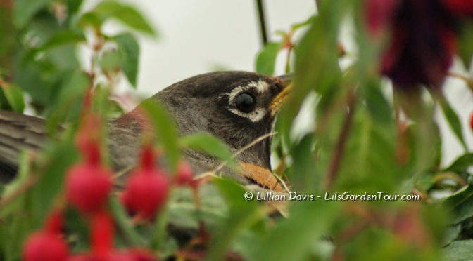 Downtime at the Garden Center, Robin's nest update…