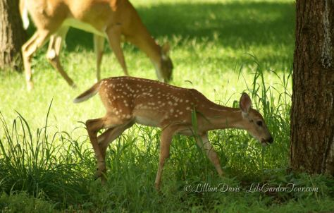Peaceful grazing (baby sighting)