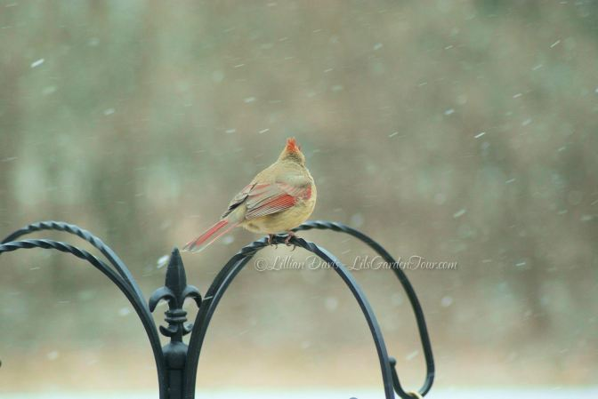 Wordless Wednesday ~ Snow Bird