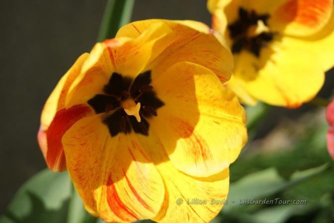 A little Sunshine after a long cold winter…